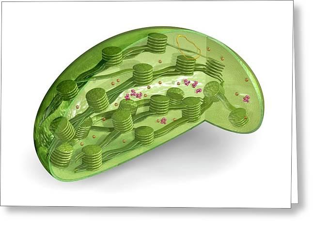 Chloroplast Greeting Card by Carlos Clarivan