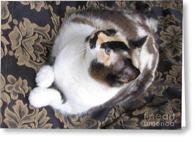 Photo Of Calico Cat Greeting Cards - Chocolate Calico Foundation Girl   SilkTapestryCatsTM Greeting Card by Pamela Benham