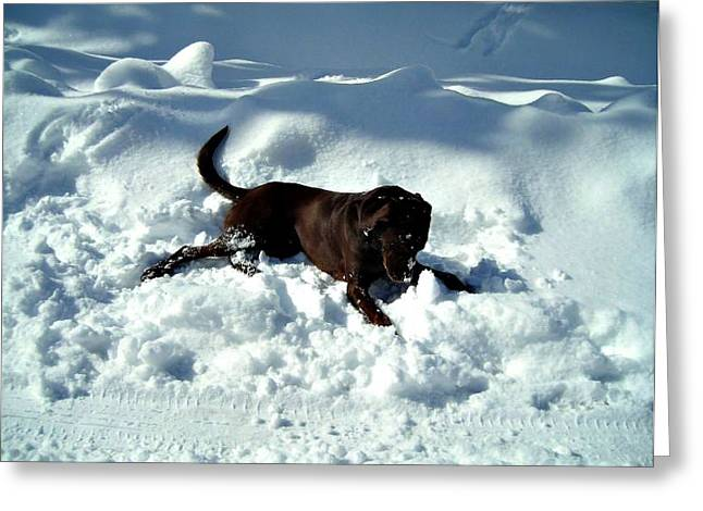 Chocolate Lab Greeting Cards - Chocolate in Snow Greeting Card by Vicki Dreher
