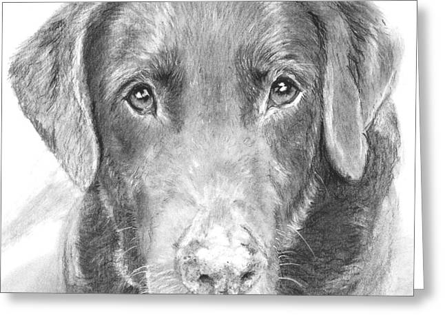 Chocolate Lab Greeting Cards - Chocolate Lab Sketched in Charcoal Greeting Card by Kate Sumners