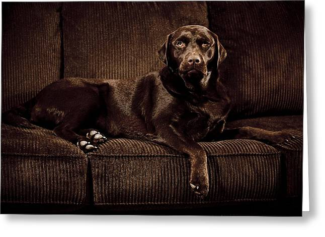 Chocolate Lab Greeting Cards - Chocolate Lab Greeting Card by Trevor Slauenwhite