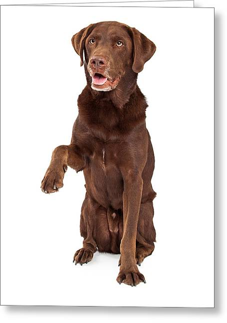 Tricks Greeting Cards - Chocolate Labrador Paw Extended Greeting Card by Susan  Schmitz