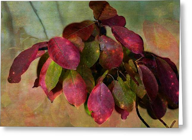 Square Format Greeting Cards - Chokecherry Leaves Greeting Card by Shirley Sirois
