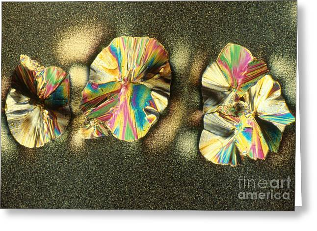 Polarized Greeting Cards - Cholesteric Liquid And Solid Crystals Greeting Card by James M. Bell