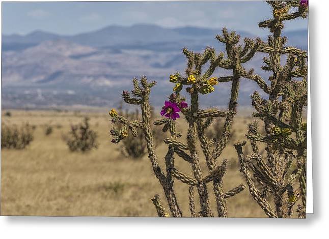 Northern New Mexico Greeting Cards - Cholla Cactus and Jemez Mountains 2 - Santa Fe New Mexico Greeting Card by Brian Harig