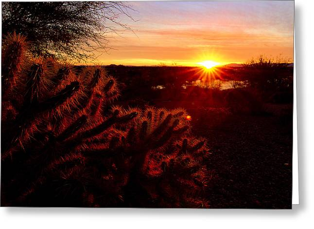 Cholla on Fire Greeting Card by Kelly Gibson