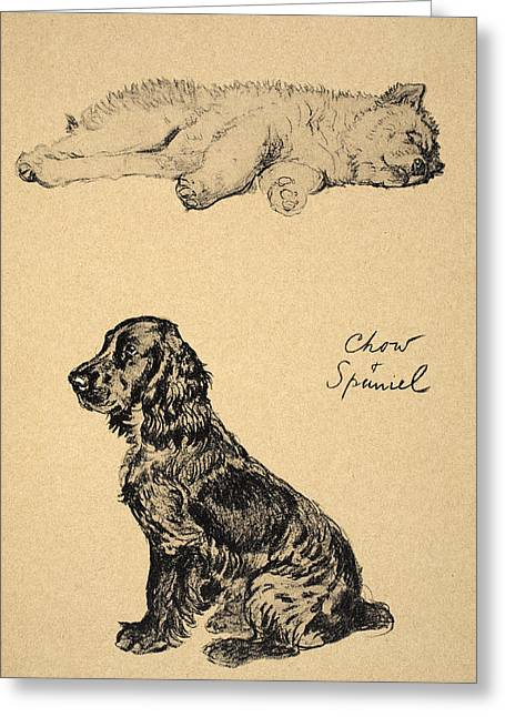 Spaniel Greeting Cards - Chow And Spaniel, 1930, Illustrations Greeting Card by Cecil Charles Windsor Aldin