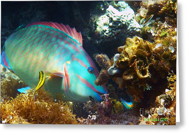 Undersea Photography Greeting Cards - Chow Time Greeting Card by Li Newton