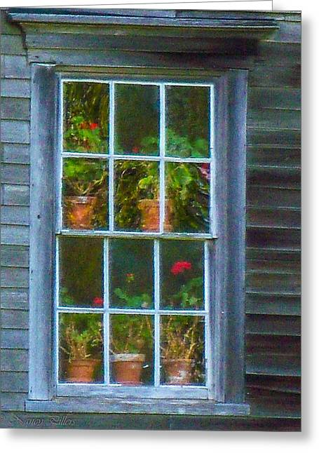 Maine Farms Greeting Cards - Christinas geraniums Greeting Card by Nancy  Pillers