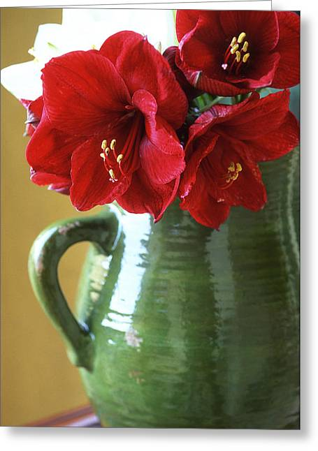 Christmas Greeting Photographs Greeting Cards - Christmas Amaryllis Greeting Card by Kathy Yates