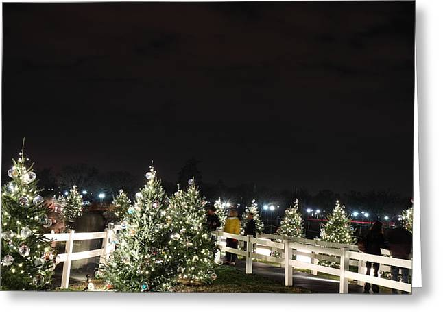 Silhouettes Greeting Cards - Christmas at the Ellipse - Washington DC - 01136 Greeting Card by DC Photographer