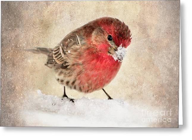 Christmas Card 9 Greeting Card by Betty LaRue