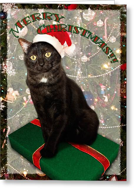 Hat Greeting Cards Greeting Cards - Christmas Cat Greeting Card by Adam Romanowicz