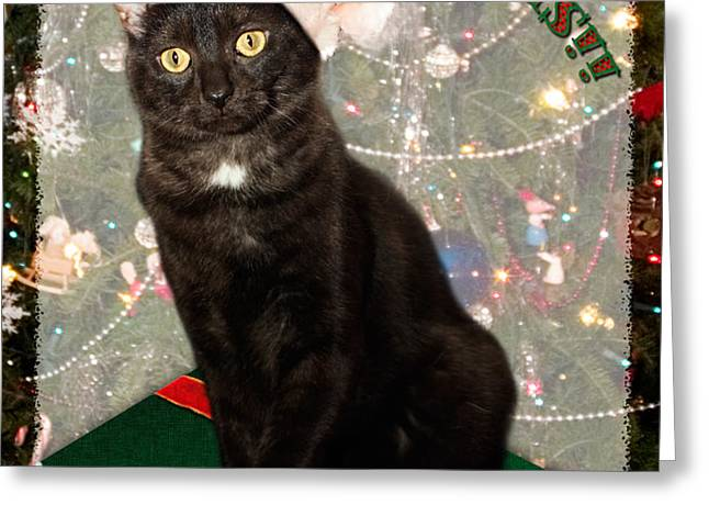 Christmas Cat Greeting Card by Adam Romanowicz