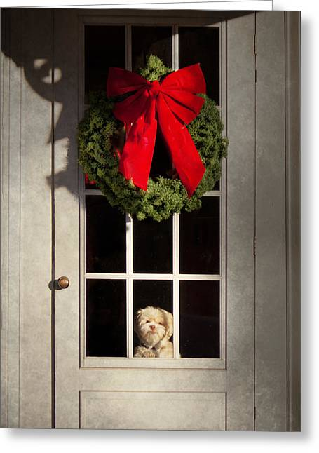 Hdr Look Photographs Greeting Cards - Christmas - Clinton NJ - Christmas puppy Greeting Card by Mike Savad