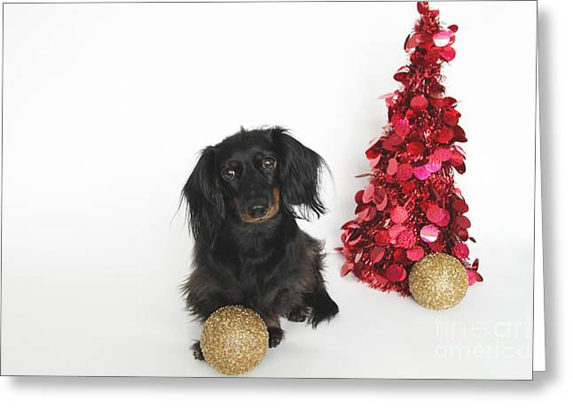 Black And Tan Dachshund Greeting Cards - Christmas Dachshund Greeting Card by Rachel Rice