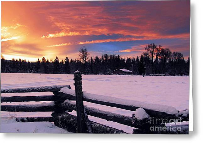 Old Tress Greeting Cards - Christmas Day Sunrise Greeting Card by Irina Hays