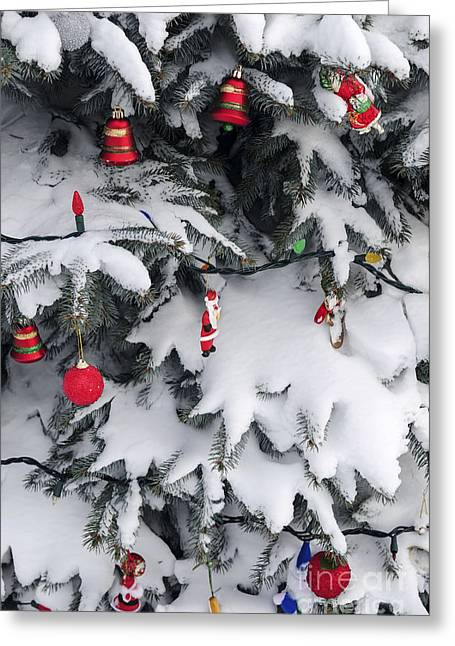 Noel Greeting Cards - Christmas decorations on snowy tree Greeting Card by Elena Elisseeva