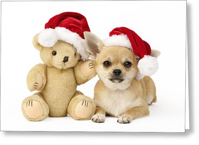 Christmas Dog And Teddy Greeting Card by Greg Cuddiford