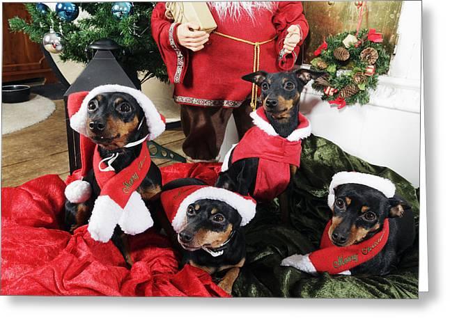 Christmas Greeting Photographs Greeting Cards - Christmas Doggies Greeting Card by Christian Lagereek