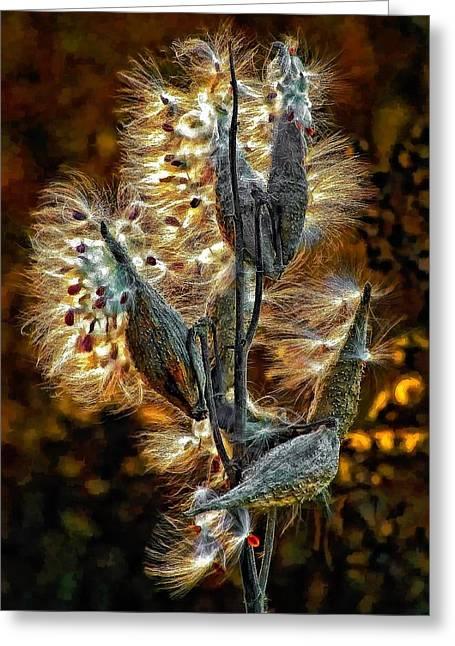 Seedpods Greeting Cards - Christmas Floozy Greeting Card by Steve Harrington