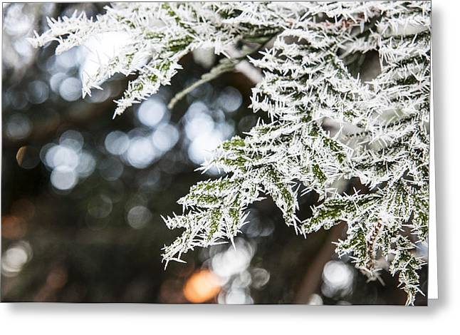 Milton Keynes Greeting Cards - Christmas frost Greeting Card by David Isaacson