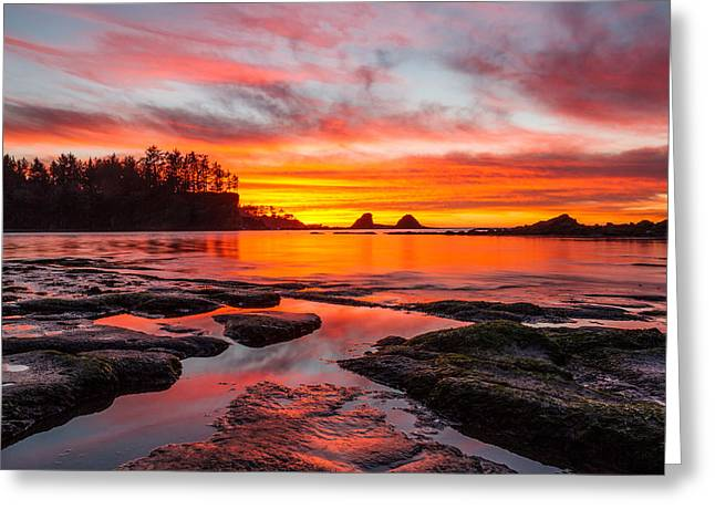 Sunset Bay State Park Greeting Cards - Christmas Gift Greeting Card by Patricia  Davidson