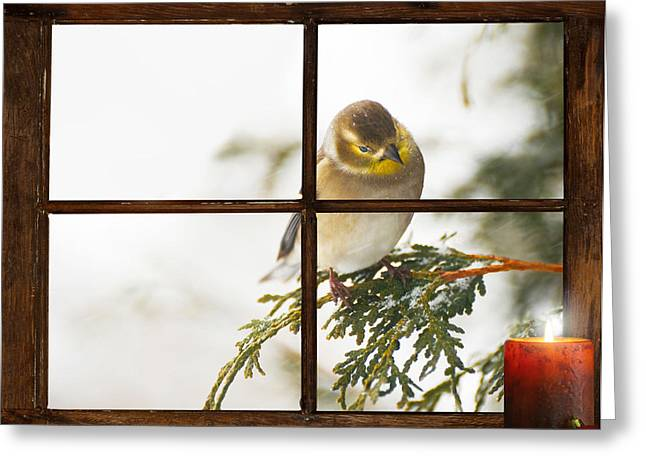 Christmas Goldfinch. Greeting Card by Kelly Nelson