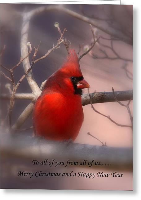 Travis Truelove Photography Greeting Cards - Christmas Greetings - Cardinal Greeting Card by Travis Truelove