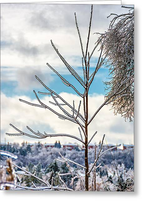 Snow Tree Prints Greeting Cards - Christmas in Bolton Greeting Card by Steve Harrington