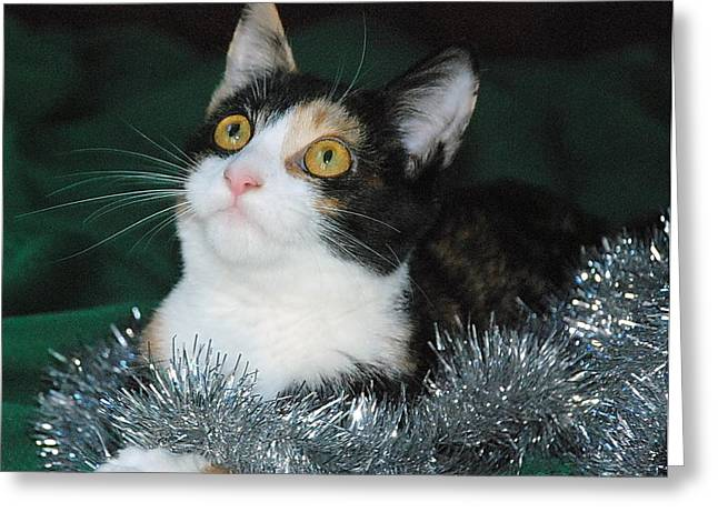 Shelter Kitty Greeting Cards - Christmas Kitty Greeting Card by Francie Davis