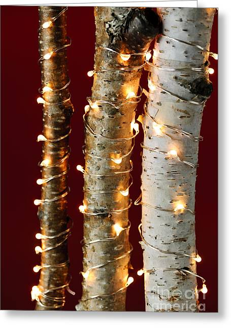 Glowing Greeting Cards - Christmas lights on birch branches Greeting Card by Elena Elisseeva
