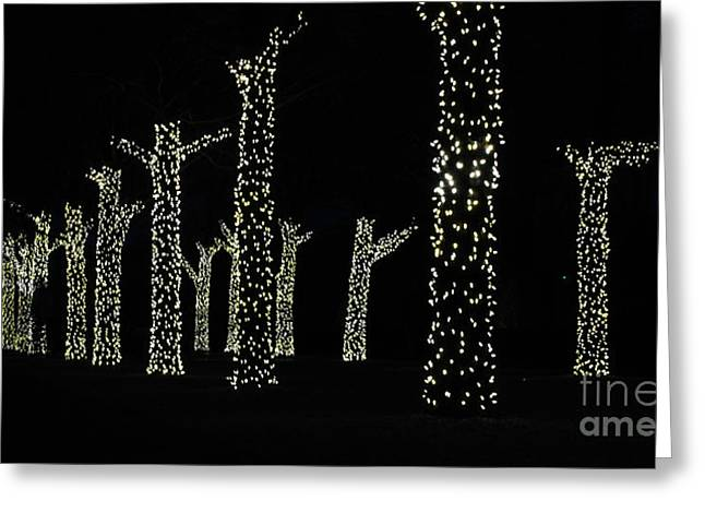 Chicago Botanic Garden Greeting Cards - Christmas Lights on Trees Greeting Card by Nancy Mueller