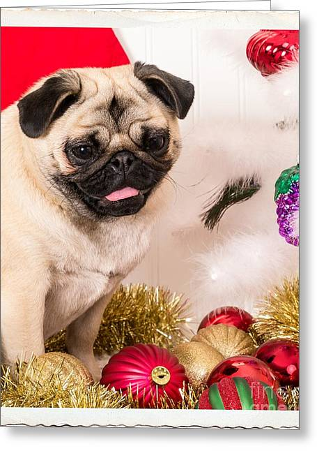 Pugs Greeting Cards - Christmas Morning Greeting Card by Edward Fielding