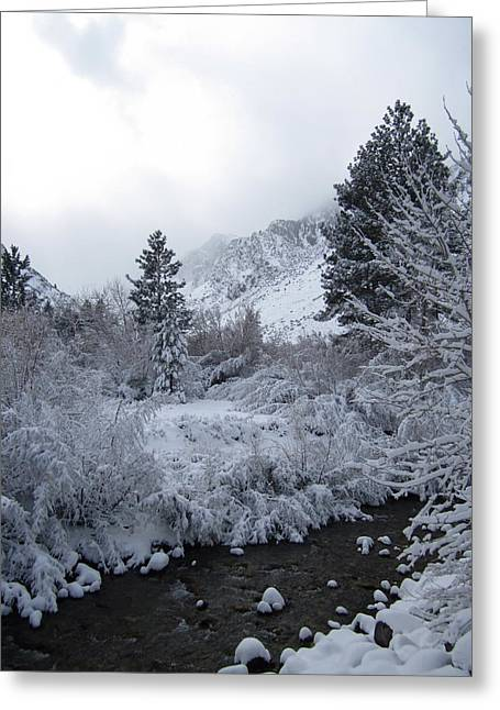 Big Pine Country Greeting Cards - Christmas On The Mountain Greeting Card by Marilyn Diaz