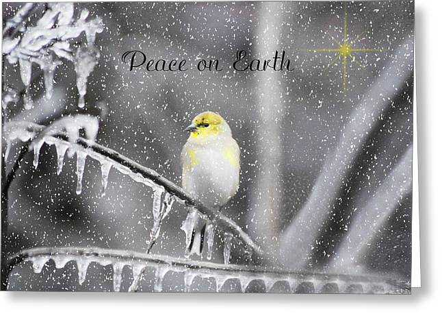 Bird On Tree Greeting Cards - Christmas Peace Greeting Card by Linda Segerson