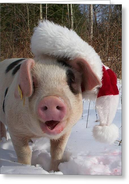 Farm Raised Pigs Greeting Cards - Christmas Pig Greeting Card by Samantha Howell