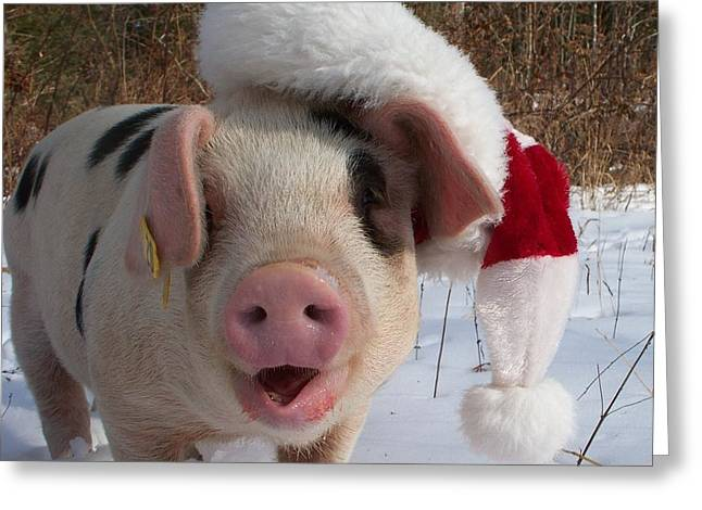 Christmas Pig Greeting Card by Samantha Howell