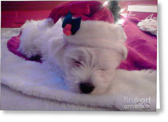 Westie Pup Greeting Cards - Christmas Pup Greeting Card by Dianne Wendell