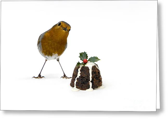 Christmas Robin Greeting Card by Tim Gainey