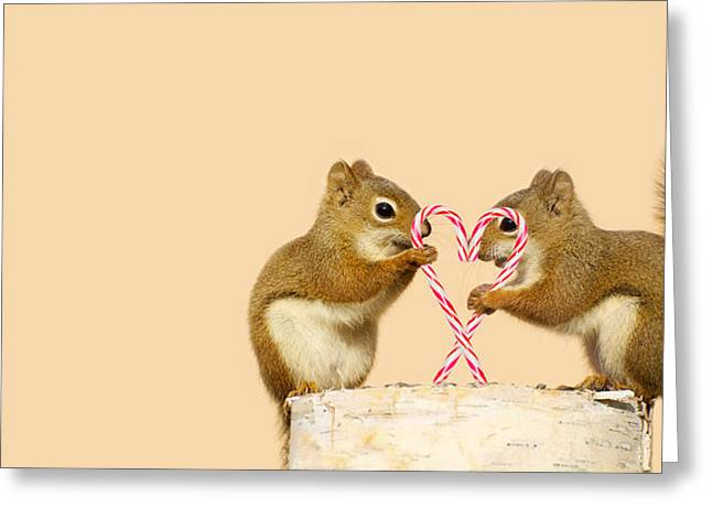 Humorous Greeting Cards Greeting Cards - Christmas Squirrels. Greeting Card by Kelly Nelson