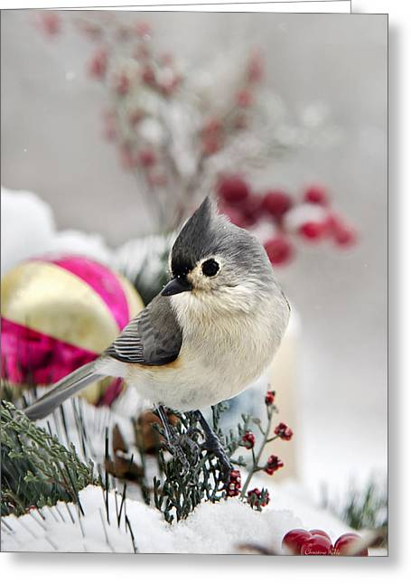 Red Birds In Snow Greeting Cards - Christmas Titmouse Greeting Card by Christina Rollo