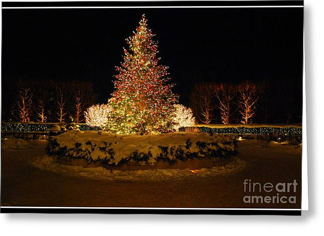Christmas Tree At Chicago Botanic Garden Greeting Card by Nancy Mueller