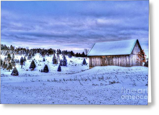 Cards Greeting Cards - Christmas Tree Farm Greeting Card by Terri Gostola
