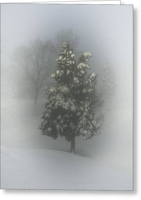 Snow Tree Prints Greeting Cards - Christmas Tree Greeting Card by Griffey