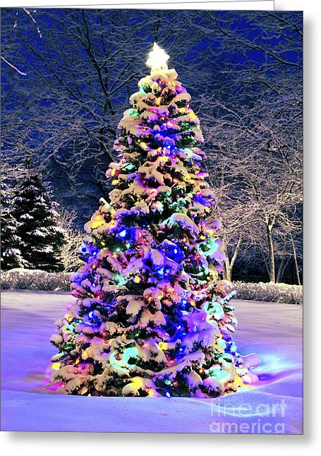Snowy Night Night Greeting Cards - Christmas tree in snow Greeting Card by Elena Elisseeva