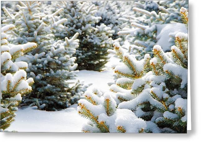 Wintry Greeting Cards - Christmas Trees Greeting Card by Brett Haarmann