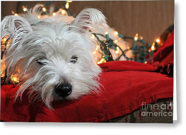 Christmas Westie Greeting Card by Catherine Reusch  Daley
