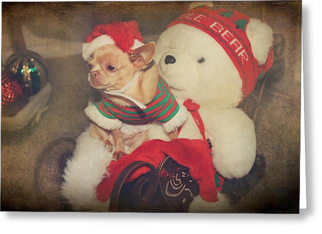Toy Dogs Digital Art Greeting Cards - Christmas Zoe Greeting Card by Laurie Search