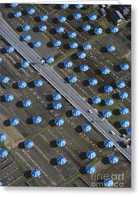 Installation Art Greeting Cards - Christo Umbrellas in Japan Greeting Card by Georg Gerster